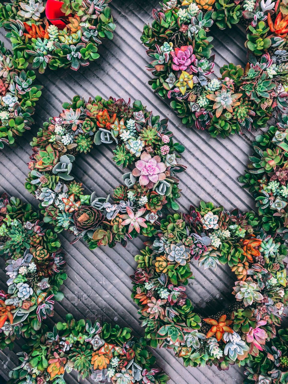 Reasons why Flower Seeds and Succulents are the Best Beach Wedding Giveaway